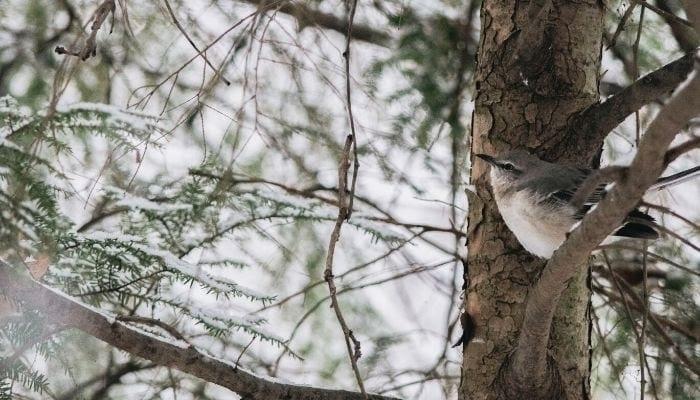 Ultimate Olympic National Park Birding Guide, George Washington Inn